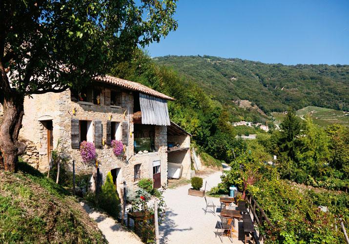 photo of coda vineyards