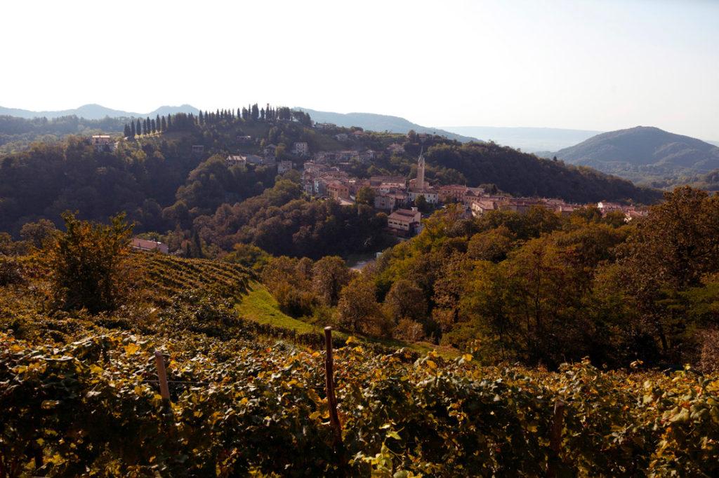 hilly Coda vineyards bathed in sunshine